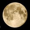 満月の夜は、月に変わってお仕置きよって言いたくなるよね!