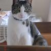 カメラ目線おネコさま。