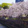 【写真の上手い撮り方学べます】桜撮影会に続き今度は福岡市動物園で実践講座開催【令和元年5月12日】