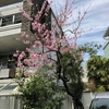 春は花(2)〜 東京の桜(ソメイヨシノ)満開の時期に、こんな花が咲いてました。