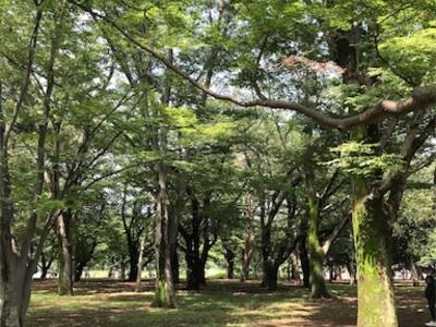 代々木公園ランニング〜思い思いに楽しむ人達で賑わっていました〜