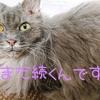 【猫の膀胱炎】効いてくれたよ抗生剤ファロペネム!服用開始1週間の話