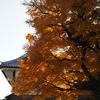 金沢城の紅葉(中編)