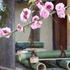 「起こしもの」で春が来た!
