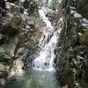 岡本八幡谷から横池に睡蓮を見に行こう