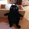 手触りがたまらないプニュプニュの猫