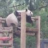 「上野動物園」行ってきた!