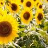 この夏を涼しく快適に過ごすためのおすすめグッズ8選