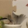 文鳥さんの水浴び