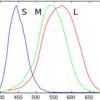 ヒトの目と光の波長について