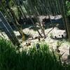 「筍」タケノコ狩りにいってきました
