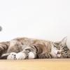 引きこもりが猫を飼うメリットデメリット