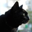 黒猫ノアの日常