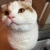 【猫】本能ブログ トモGPの相方を紹介します