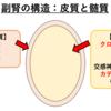 【副腎髄質腫瘍】犬猫のクロム親和性細胞腫(褐色細胞腫)