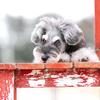 ペットのカラー診断、それぞれの色が持つ意味