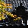金沢も紅葉始まりましたが・・・・・「珠姫の寺天徳院の紅葉」