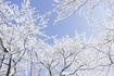 冬の土用は運気の変わり目!掃除も年越しもまだ間に合います♬