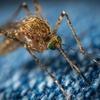 それでも走るか?!211 ランニングが蚊を吸い寄せていたとは・・・