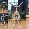 ロボット骨格 新バージョン