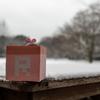 雪が降ったら撮影チャンス ~柏の葉公園散策~