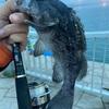 今日の夜釣り(・ω・)