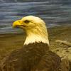 【アメリカ】ニューヨーク一人旅 ー アメリカ自然史博物館