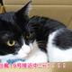 猫は台風が怖い!対策や避難はどうする?