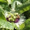 蜂と鳥 カタカムナで知る現れ