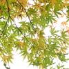 秋はついつい紅葉を撮ってしまうのだけど