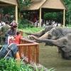 閉鎖間際のシンガポール動物園に行ってきた