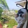 閑古鳥が鳴いているので、追い払うために猫写真を載せる?