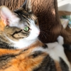 【愛猫日記】毎日アンヌさん#202