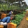 「私たち、太陽光パネルの下で農業します!」 ソーラーシェアリングとは
