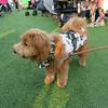 【犬マンガ日記】盆ドッグ2016,イベントに行って来ました。
