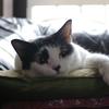 うちの猫の一周忌