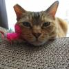 5月前半の #ねこ #cat #猫 どらやきちゃんA