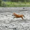 EOS R で飛行犬