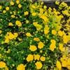 初夏の陽気、粘土質の庭を掘り起こす。