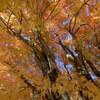 【撮影】南足柄市でさらに遅い紅葉に出会えた話。