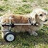 親心子知らず、飼い主心愛犬知らず(笑)日中に散歩したがる愛犬に猛暑を分からせる!