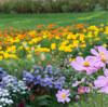 秋の大花壇