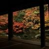【京都】〜紅葉の季節!個人的オススメ紅葉スポット〜