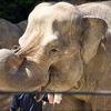 上野動物園をD3400で撮影 ①