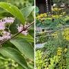 7月のこの暑い最中でも,鎌倉おんめ様では,境内の花が,小径を行く人びとを楽しませてくれます.ムクゲ,ハマボウ,ヒメノカリスの他,コムラサキとオミナエシ.シュウメイギク,ガマ,ハス,ユウスゲ,そしてオカトラノオ.ユウスゲとオカトラノオは初めて名前を確認しました.オカトラノオ,なかなかいい名前です.命名者もこの花が好きでつけたような気もします.勝手な推測ですが.