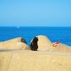 三島由紀夫が描く、美しい自然と人間の営みの舞台。伊勢湾に浮かぶ「神島」へ 【その1】