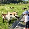 ハイヅカ湖畔の森キャンプ場.3:三良坂散策,トレッタみよし,森のポッケ