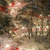 冬の津和野を撮る