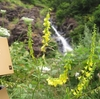 増毛町 細くて白い銀鱗の滝にイッテミル