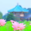 花蓮② 八景